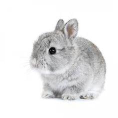 jouet lapin - Résultats Yahoo France de la recherche d'images
