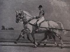 Vintage Munnings Book Plate Print Equestrian Sporting Art 1937 Horses English