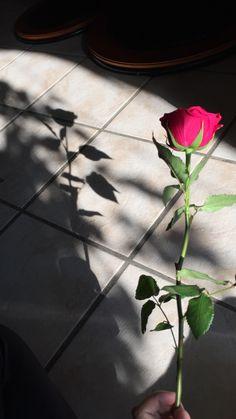 Flower Phone Wallpaper, Rose Wallpaper, Tumblr Wallpaper, Photo D Art, Fake Photo, Hand Photography, Tumblr Photography, Beautiful Flowers Wallpapers, Beautiful Roses