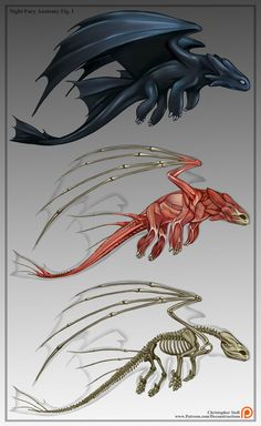 Toothless Deconstruction (Night Fury Anatomy) by Christopher-Stoll.deviantart.com on @DeviantArt