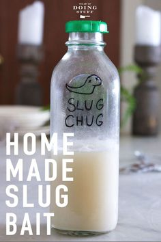 Have slugs? Are you using beer traps to catch them? Beer is for drinking, not for catching slugs. Make your own DIY slug bait. Slugs In Garden, Veg Garden, Garden Pests, Garden Care, Garden Slug, Ants In Garden, Brick Garden, Garden Insects, Veggie Gardens