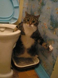 What the hell is this cat trying to do potty?