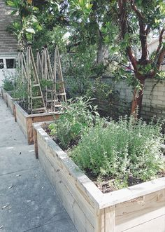 Raised Vegetable Garden Beds Can Be A Great Gardening Option Veg Garden, Vegetable Garden Design, Vegetable Gardening, Gardening Tips, Raised Flower Beds, Raised Garden Beds, Raised Beds, Growing Tomato Plants, Growing Vegetables