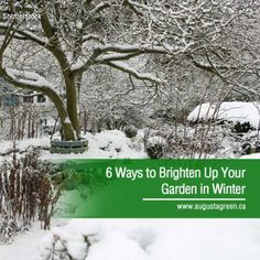 Many people feel the winter blues around this time of year, but brightening up your small garden can be a way to help make winter more satisfying. Read on for a few winter garden ideas to give the garden some extra life and colour despite the season. Landscape Lighting, Outdoor Lighting, Sprinkler, Irrigation, Winter Garden, Green Grass, Water Features, Gardening Tips, Garden Ideas
