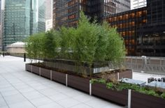 large rooftop garden planters