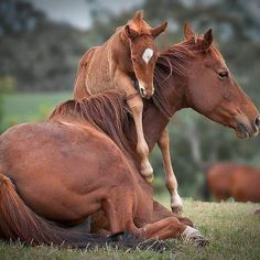 "Related posts: A sweet horse moment Snuggling with mommy Welcome to the family Horse hug Mommy love An ""awww"" moment… Massive horse hug Beautiful Horse by Vikarus Sweet little skunk baby Gorgeous stallion"