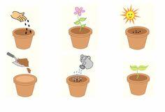 Sequencing Cards, Sequencing Activities, Kindergarten Math Worksheets, Preschool Learning Activities, Preschool Classroom, Plant Experiments, Science Experiments Kids, Plant Box, Activity Sheets