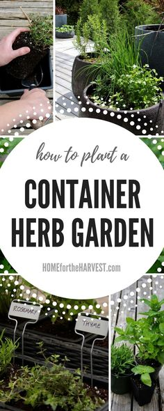 This detailed, easy-to-follow tutorial will show you exactly what you need for the perfect herb container garden, plus walk you through the steps to planting your own container herb garden | Home for the Harvest #containerherbgarden #organicherbgarden #organiccontainergarden #containergarden #herbgarden #beginnergarden #herbgardening #howtogarden #gardening #organicgardening