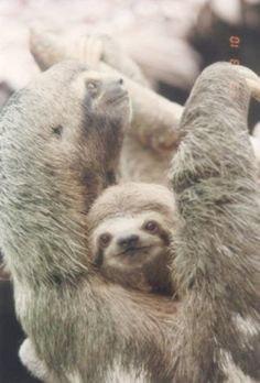 Sloths are so interesting.