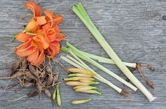 Different food uses for all parts of the Daylily