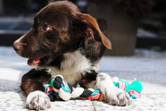 DIY Dogtoy | 25 DIY Projects Your Pet Will Love