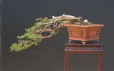 13 Types of Bonsai Trees (by Style and Shape Plus Pictures) Bonsai Tree Types, Indoor Bonsai Tree, Bonsai Plants, Bonsai Garden, Bonsai Trees, Replant, Tropical Flowers, Home And Garden, Shapes