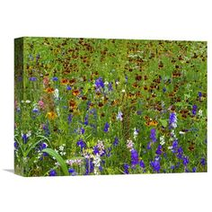Delphinium And Mexican Hat Flowers In Meadow, North America By Tim Fitzharris, 12 X 16-Inch Wall Art