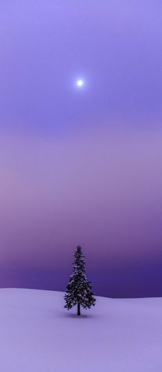 Looking at this pic, you can just feel the silence, the stillness of the winter… Arbre Serenity Prayer - Full Version, 7 Benefits and its History Beautiful World, Beautiful Places, Beautiful Pictures, Winter Szenen, Purple Sky, Periwinkle, Snow Scenes, All Nature, Winter Beauty
