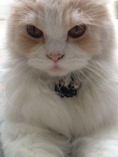 Hi....Let me introduce myself My name is Milo Nice to meet you