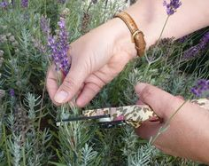 I have lavender in my flower garden and when I take cuttings inside, its aroma is wonderful! How To Prune Lavender. Very useful tips =) Growing Lavender, Growing Herbs, Caring For Lavender Plants, Lavender Plant Care, Lavender Garden, Lavender Fields, Lavender Pruning, Propagating Lavender, Herb Garden