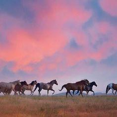 Beautiful ranch horses at sunrise in Wyoming.  www.PhyllisBurchettPhoto.net  #equineart #westernhomedecor #westernart    #Regram via @www.instagram.com/p/B2p6bHqJ_E5/ Art Photography, Fine Art, Western Art, Art, Fine Art Photography, Sunrise