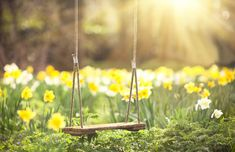 Large Framed Print - Tree Swing in a Wild Flower Meadow/Field (Picture Poster) Wild Flower Meadow, Wild Flowers, Spring Flowers, Images Instagram, Spring Images, Yellow Cottage, Daffodil Flower, Flower Tree, Yellow Springs