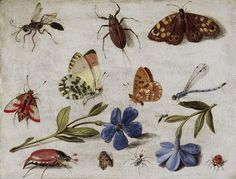 """Butterflies and Other Insects"" by Jan van Kessel the Elder, Flemish painter of still lifes, 1626-1679"