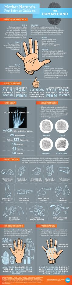 Todo lo que debes de saber sobre la mano humana #infografia #infographic