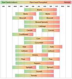 Zone 6 vegetable garden seeding and planting schedule