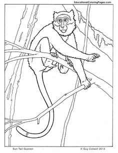 Primates Book Two « Animal Coloring Pages for Kids Monkey Coloring Pages, Animal Coloring Pages, Colouring Pages, Coloring Pages For Kids, Adult Coloring, Coloring Books, Primates, Mammals, Editing Pictures