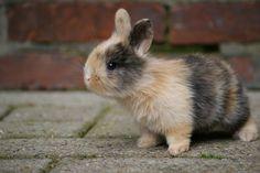 Bunni bunnie bunny bun.  With little nubby ears.