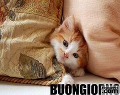 buongiorno-gattino Non ditemi che anche il sabato mi devo alzare presto? Vabbè!  Buongiorno a tutti... e un buon week-end peloso!  #buongiornofbsocialpet #buongiornopets