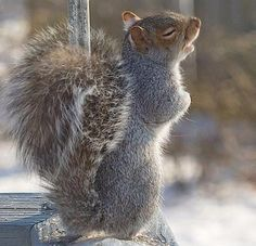 This squirrel looks like it's about to start up a musical number...