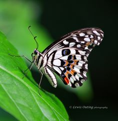 Butterfly by Lewis Outing on 500px