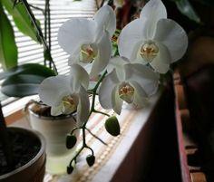 Cum salvezi o orhidee ofilita - BZI. Flower Garden, Plants, Garden, Growing, Growing Vegetables, Flowers