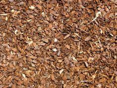 Pinienrinde eignet sich wunderbar zum Mulchen, da dieses Material milder und neutraler als der einheimische Rindenmulch von Kiefern und Fichten ist.