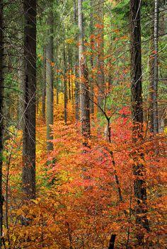 ✮ Color Filled Forest