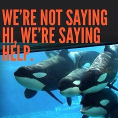 Thank you for boycotting Seaworld and for campaigning against the slave industry.