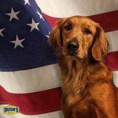 Bush S Baked Beans Dog
