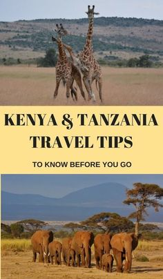 Essential Kenya and Tanzania Travel Tips You Need To Know Before Visiting