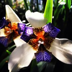 exotic orchids | exotic orchid