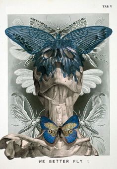 """ANATOMY """"We Better Fly"""" - Isabelle Dalle"""