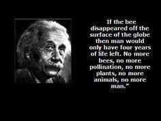 over bijen