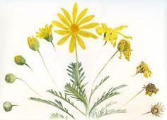 Botanicals - Art by noel badges pugh