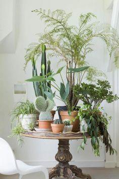 Varier les tailles et les espèces dans un endroit réduit pour créer un mini jardin verdoyant