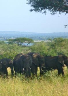 ST Readers suggests this Solo Travel Destination - Uganda http://solotravelerblog.com/solo-travel-destination-uganda/