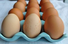 Little B Cooks: Chronicles from a Vermont foodie: Raising Your Own Chickens