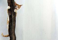 Tabby Cat Tree Funny White Nursery Room Decor by GrayTabbyCat, $10.00