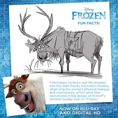 #FunFact: The Frozen filmmakers invited a real-life reindeer to the Walt Disney Animation Studios to observe the animal's physical makeup. That way they could get Sven just right!