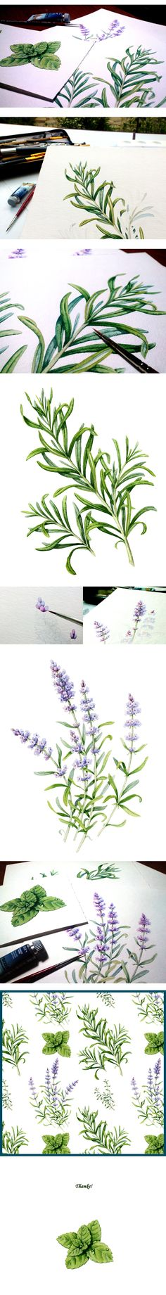 Herbs on Behance by Marin Lvova • watercolour • illustration • botany • aquarelle • mint • rosemary • lavender • thyme