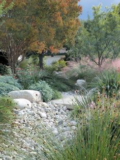 Colorful, and Water-wise: An Impossible Dream? Low water use gardens can be stunning and the dry creek bed keeps everything from feeling 'dry'.Low water use gardens can be stunning and the dry creek bed keeps everything from feeling 'dry'. Dry Garden, Rain Garden, Garden Shrubs, Garden Hose, Garden Beds, Low Water Landscaping, Landscaping With Rocks, Garden Landscaping, Landscaping Ideas