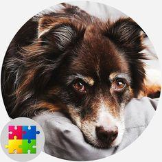 Free Jigsaw Puzzles, Corgi, Animals, Corgis, Animales, Animaux, Animal, Animais