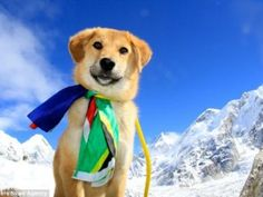 Former stray that was rescued from a rubbish dump becomes first canine to climb Mount Everest Monte Everest, All Dogs, I Love Dogs, Mount Everest Base Camp, Climbing Everest, Homeless Dogs, Dog Stories, News Stories, Mundo Animal