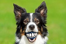 We love our four legged friends, don't forget to take care of their teeth too!